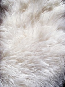Ce poti face cu covorul dupa ce i se termina durata de viata 1